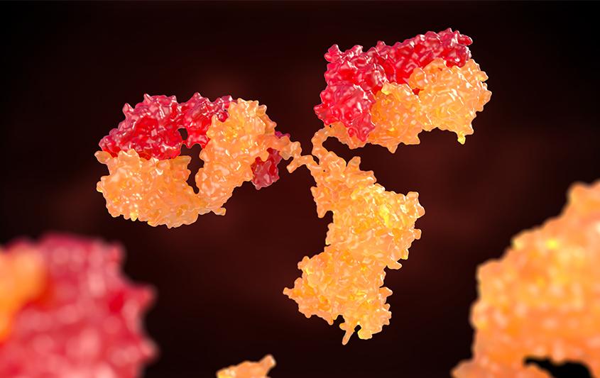 Imunidade mediada por células B e anticorpos - Estrutura dos anticorpos