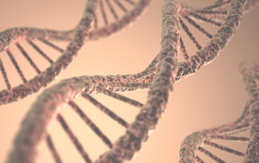 Cariótipo e morfologia dos cromossomos
