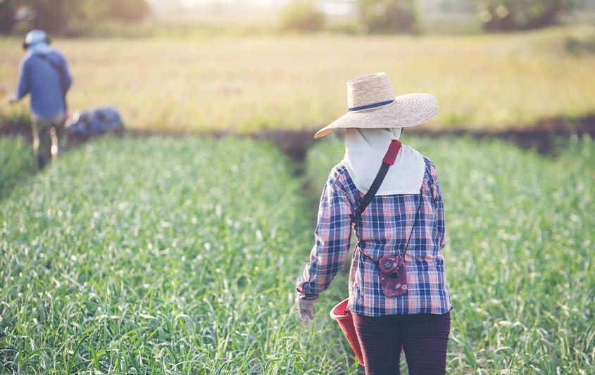 Gestão de propriedades rurais